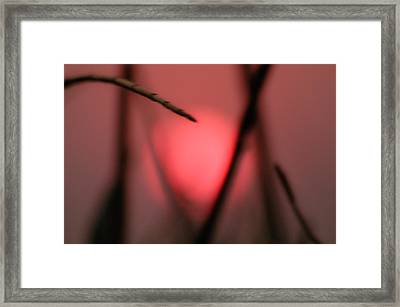 Sungrass Framed Print