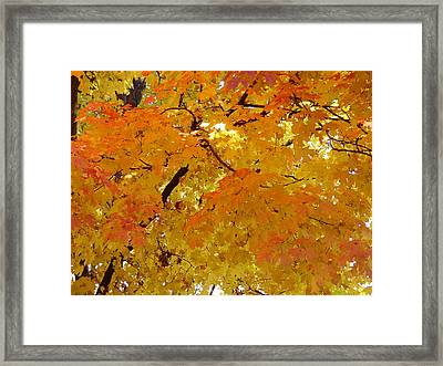 Sunkissed 3 Framed Print by Elizabeth Sullivan