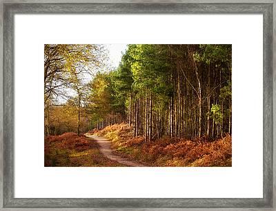 Sunlight Across Trees In Cannock Chase Framed Print