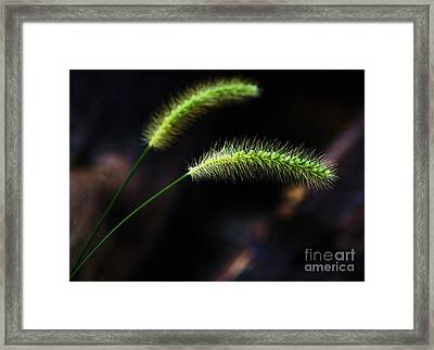 Sunlight And Shadows Framed Print by Julie Clements