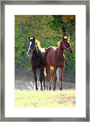 'sunlight Babies' Framed Print by PJQandFriends Photography
