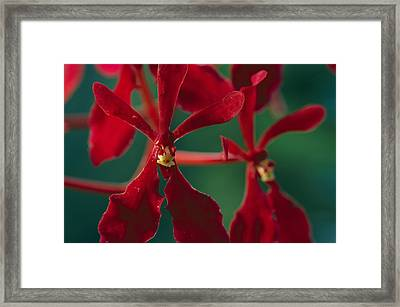 Sunlight Filters Through A Forest Framed Print by Tim Laman