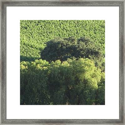 #sunlight On #treetops #nofilter Framed Print