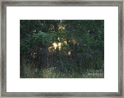 Sunlight Orbs Framed Print by Jane Whyte