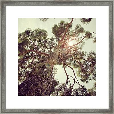 Sunlight Passing Through Branches Of Tree Framed Print by Sbk_20d Pictures