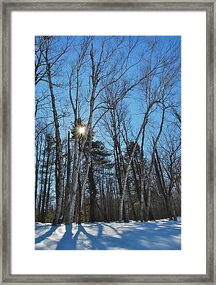 Sunlight Through Birches Framed Print