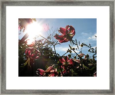 Sunlight Through Flowers Framed Print by Kimberly Mackowski