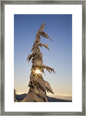 Sunlight Through Snow-covered Tree Framed Print by Craig Tuttle