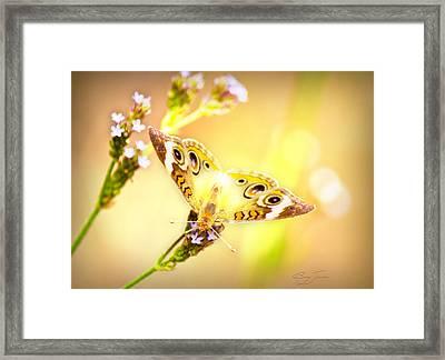 Sunlit Beauty Framed Print by Barry Jones
