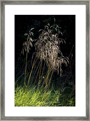 Sunlit Grasses. Framed Print by Clare Bambers