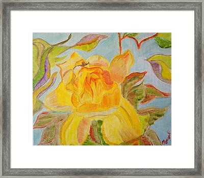 Sunlit Rose Framed Print by Meryl Goudey