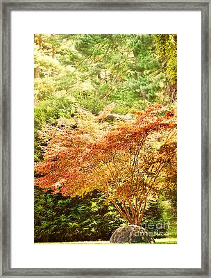 Sunlit Tree Framed Print by HD Connelly