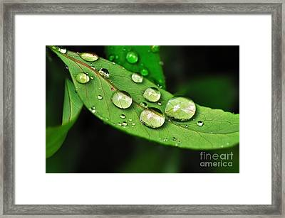 Sunlit Water Droplets Framed Print by Kaye Menner