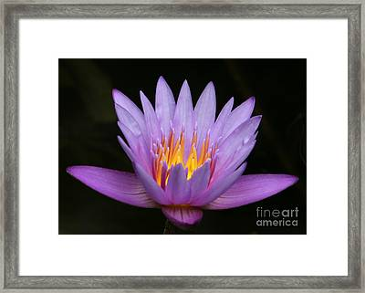 Sunlit Water Lily Framed Print by Sabrina L Ryan