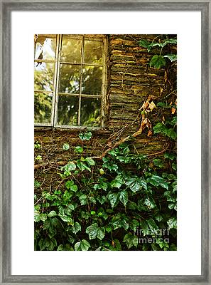 Sunlit Window And Grapevines Framed Print by HD Connelly