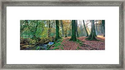 Sunlit Woodland, Birks O'aberfeldy, Perthshire Framed Print by Kathy Collins