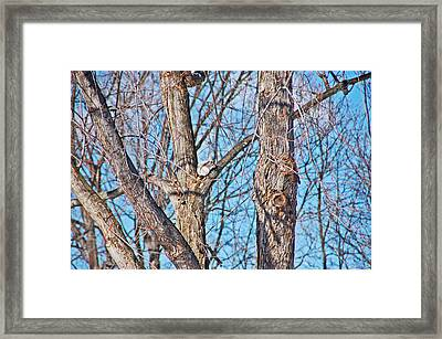 Sunning In The Tree Framed Print by Aimee L Maher Photography and Art Visit ALMGallerydotcom