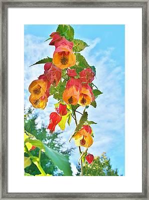Sunny Bells Framed Print