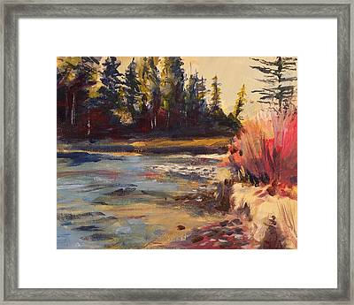 Sunny Colorado Wooded Stream Framed Print by Walt Maes