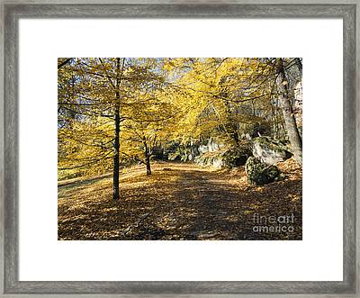 Sunny Day In The Autumn Park Framed Print by Michal Boubin