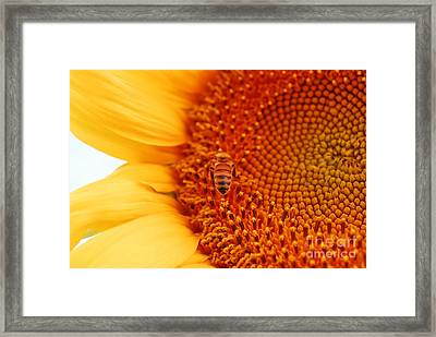 Framed Print featuring the photograph Sunny Day by Laurianna Taylor