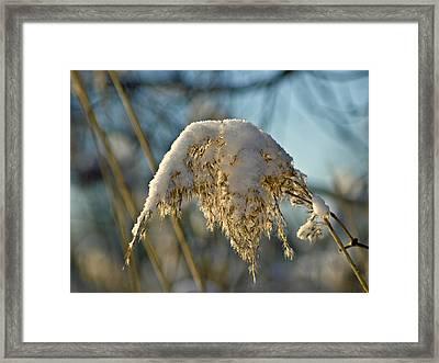Sunny Day Snow Fall On The Bull Rushes Framed Print by LeeAnn McLaneGoetz McLaneGoetzStudioLLCcom