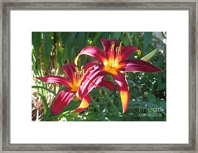 Sunny Daylilies Framed Print by Tina Ann Byers