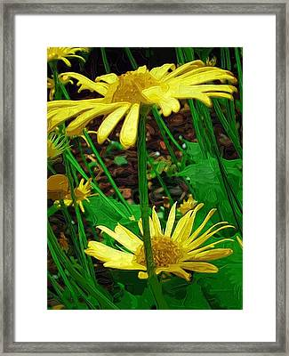 Sunny Faces Framed Print by Amanda Moore