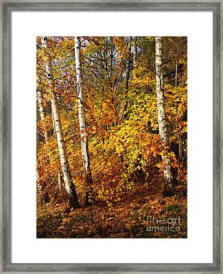 Sunny Fall Day Framed Print