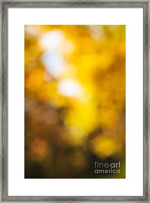 Sunny Fall Forest Framed Print by Elena Elisseeva