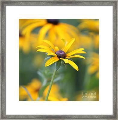 Sunny Flower - 2 Framed Print by Marilyn West
