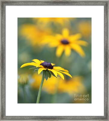 Sunny Flower Framed Print by Marilyn West