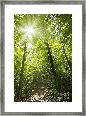 Sunny Forest Path Framed Print