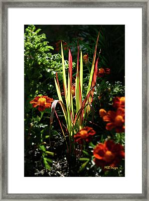 Sunny Grasses Framed Print by Margaret Buchanan
