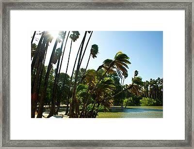 Sunny Lake Shore Framed Print