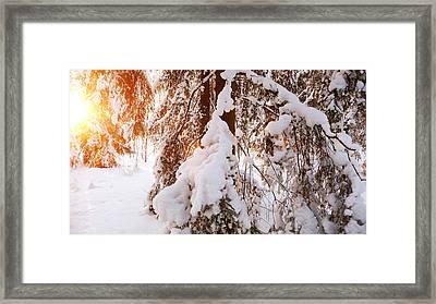 Sunny Moment Framed Print