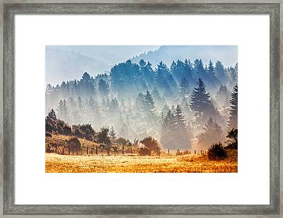 Sunny Morning Framed Print by Evgeni Dinev