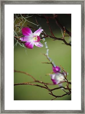 Sunny Orchid Framed Print by Brandon McNabb