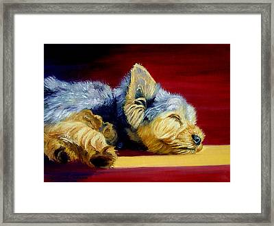 Sunny Patch Yorkshire Terrier Framed Print by Lyn Cook