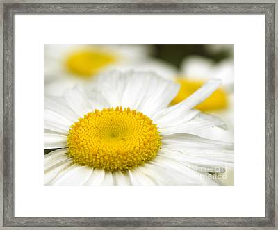 Sunny-side Up Daisy Framed Print by Sharon Talson