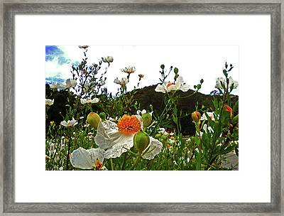 Sunny-side Up Framed Print by Lauren Goia