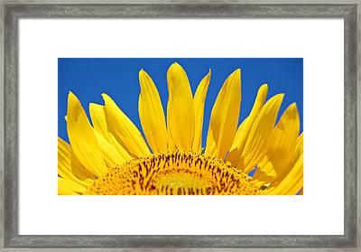 Sunny Skies Framed Print by Amy Schauland