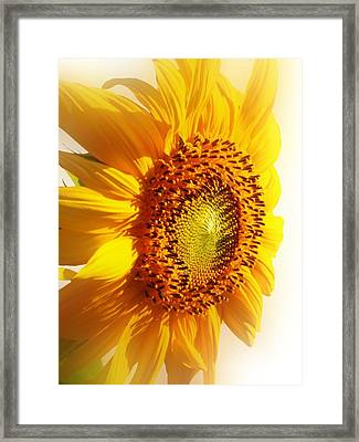 Sunny Softness Framed Print