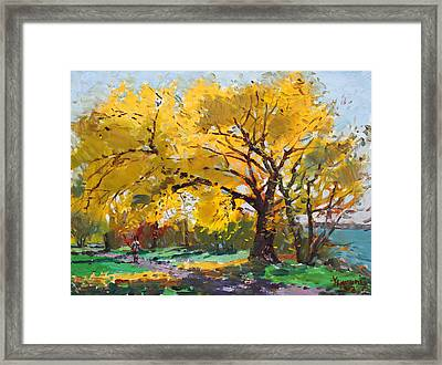 Sunny Sunday With Viola Framed Print by Ylli Haruni