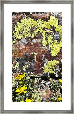 Sunny Yellow Framed Print by Teresa Dixon