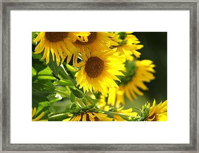 Sunnyland Framed Print