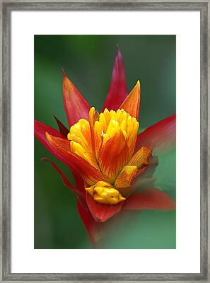 Framed Print featuring the photograph Sunrise - Sunset by Anne Rodkin