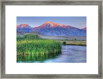 Sunrise Alpenglow On Mt Tom And Owen's River, California, Usa, October 2010 Framed Print
