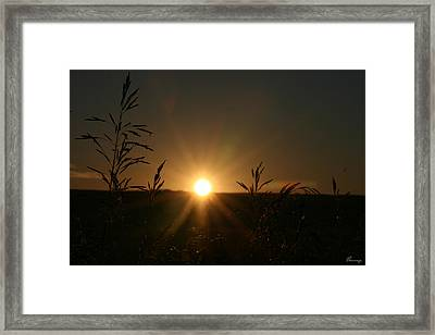 Sunrise And Spiderwebs Framed Print by Andrea Lawrence