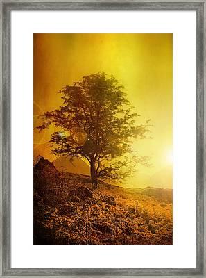 Sunrise Flare Framed Print by Svetlana Sewell